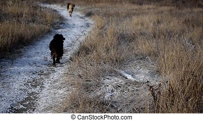 Two stray dogs run in snow away from camera