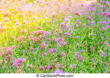 Beautiful pink bunch flowers on green grass background . -...