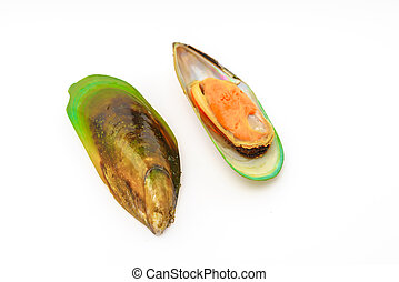Fresh mussel on white background . - Fresh mussel on white...