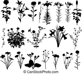 Flower - Collection of silhouettes of different species of...