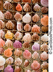 scallop shells - decoration with many different scallop...