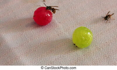 Wasps are sitting on candies - Wasps are sitting at round...