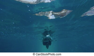 Sea lion swimming alone under blue sea water - Underwater...