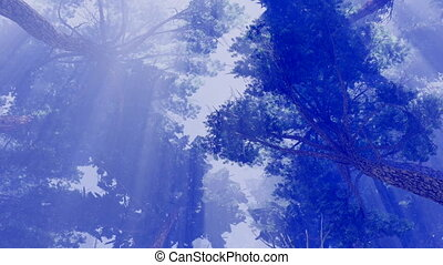 Pine crowns against sunshine sky 4K - Magical pine forest at...