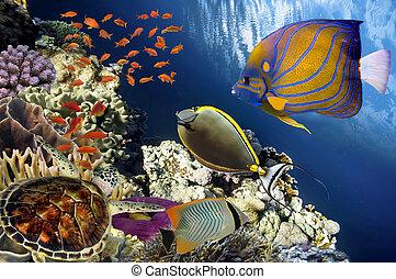 Turtle (Hawksbill Sea Turtle) under