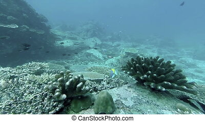 Coral reef and tropical fish at Seychelles, Indian Ocean