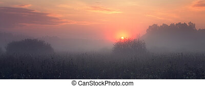Warm misty morning landscape and sun rising over meadow