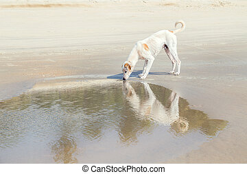 White dog on a amazing deserted tropical beach