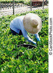 Agricultural Nursery worker - 2