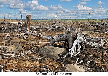 Old stumps - The Russia. The Kola peninsula. Consequences of...