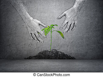Hands of man touching green plant in soil on concrete...