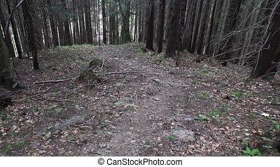 Steep hill descent - Descending the steep forest slope stone...