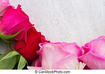 Pink fresh roses buds border on white agred wooden...