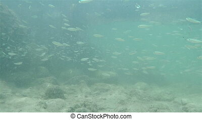 Tiny fish and rocky shore - Minnows and rocky shore...