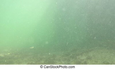 Minnows and snapper Fl keys - Underwater minnows, tiny fish,...