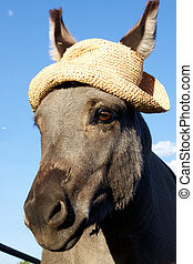Miniature Donkey Portait with Hat - a cute miniature donkey...