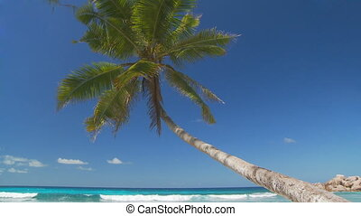 palmtree in paradise - beautiful palmtree hanging over the...