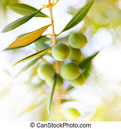 Olive branch closeup. Selective focus, shallow DOF!!!