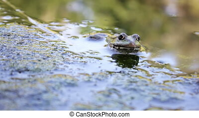 River frog on shore