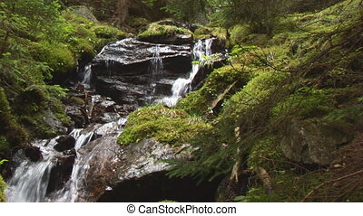 waterfall in wood - small cascades in humid forest