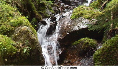 tiny waterfall and humid vegetation in forest