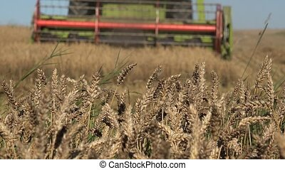 farm combine work in grain field harvest time. Focus change....