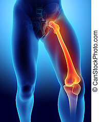 3D illustration of Femur, medical concept. - 3D illustration...