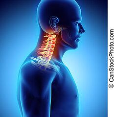 3D illustration of Cervical Spine, medical concept. - 3D...
