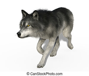 Grey wolf trotting - 3d render of a grey wolf trotting...