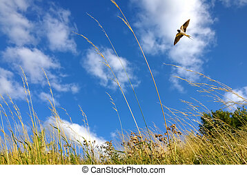 Beautiful landscape with flying bird natural background -...