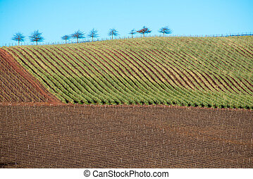 Agricultural Land with Trees - Several trees stand on the...