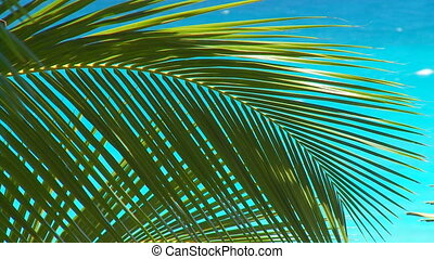 palmleaves in wind close - palmleaves close moving in wind...