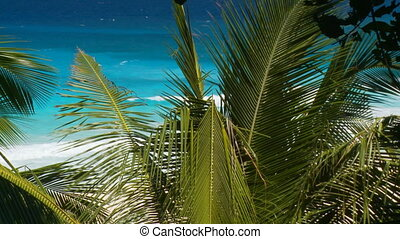 palmleaves in wind - palmleaves on the beach moving in wind