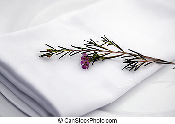 Rosemary - Fresh green herb rosemary on white background