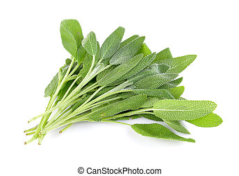 Sage plant on a white background