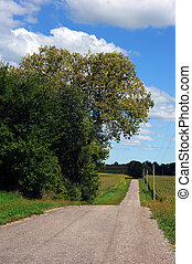 Country Road and Corn Crops