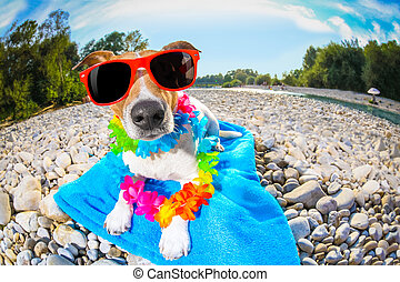 summer beach dog - jack russell dog with lying on a blue...