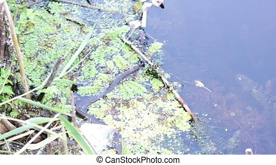 snake floating in river - Snake River floats in water on...