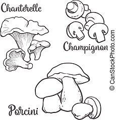 Set of chanterelle, champignon, porcini edible mushrooms...