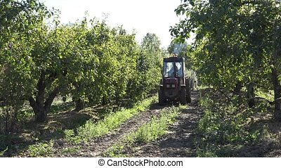 farm tractor drive apple tree plantation at harvest time. 4K...