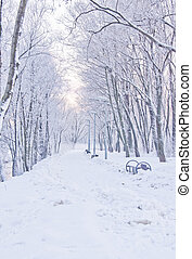 snowy path in winter - snowy path through the trees in the...