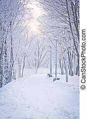 snowy path in park - snowy path through the trees in winter...