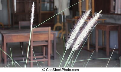 Local store front scene of reeds waving in the winds, stock...