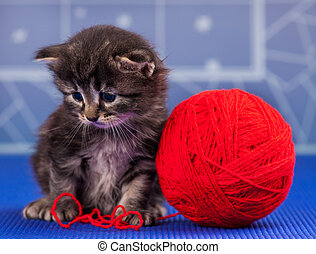 Cute little kitten with bright red yarn ball over light-blue...