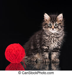Cute siberian kitten with ball of red threads over black...