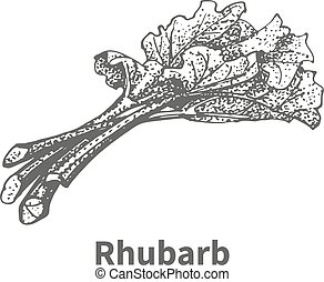 Vector illustration hand-drawn rhubarb