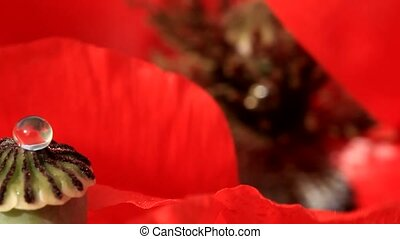 poppy capsule close-up - Boll poppy with water drop on red...