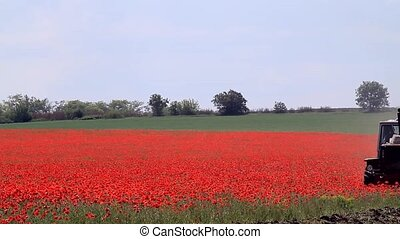Tractor on a poppy field - Tractor plowing poppy field on a...