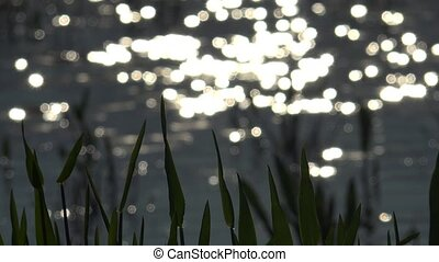 Soft focus bokeh light effects on water,Ultra hd 4k, real...