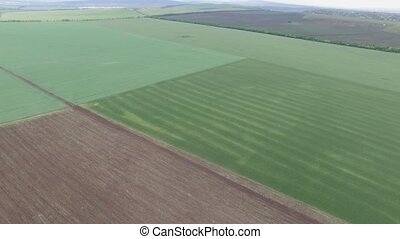 fields of grain from a height - Aerial. green wheat field...